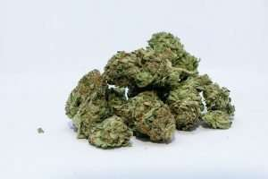 Buds of cannabis